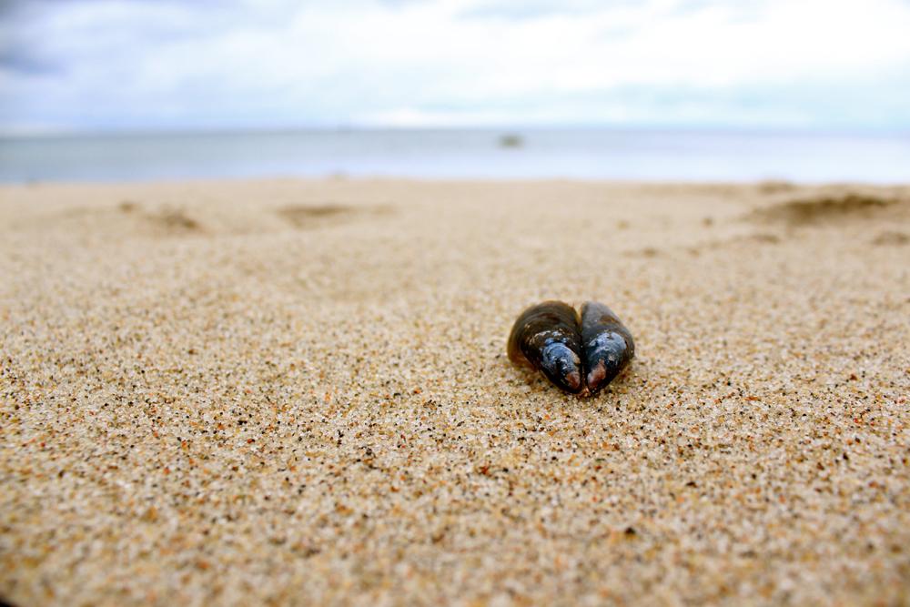 Muscheln sammeln an der Ostsee